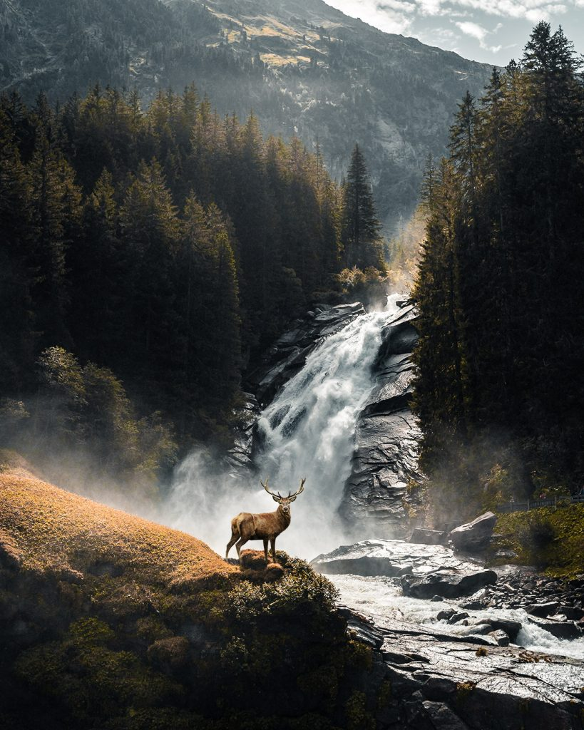 Der Hirsch in der Natur
